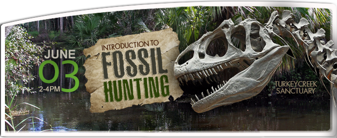 Fossil_Banner