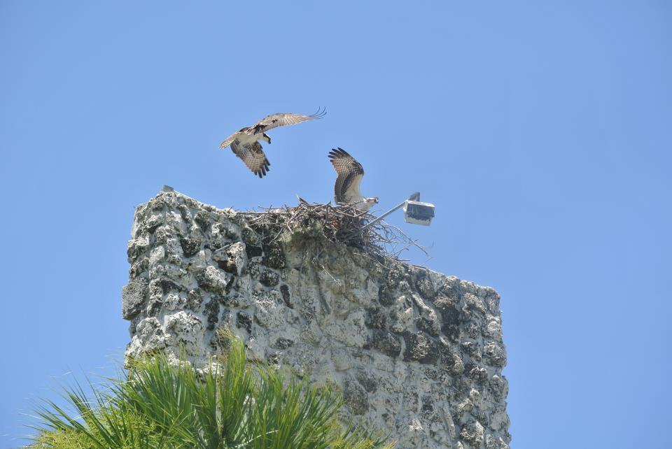 Bird Nest on Port Malabar Monolith