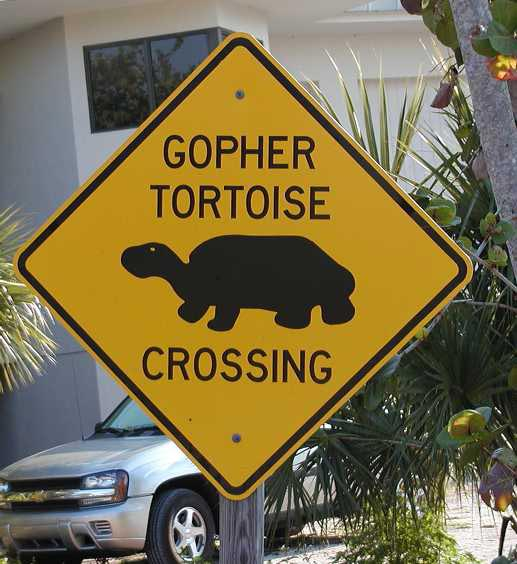 Gopher Crossing Sign