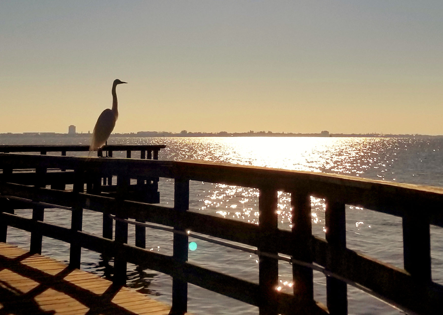 Heron at Castaway Point Park Pier