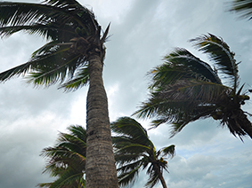Palm Trees during a storm